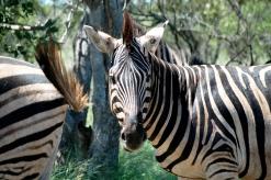 Kruger Park Feb 2007 068