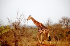 KrugerPark 007