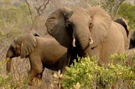 KrugerPark 024