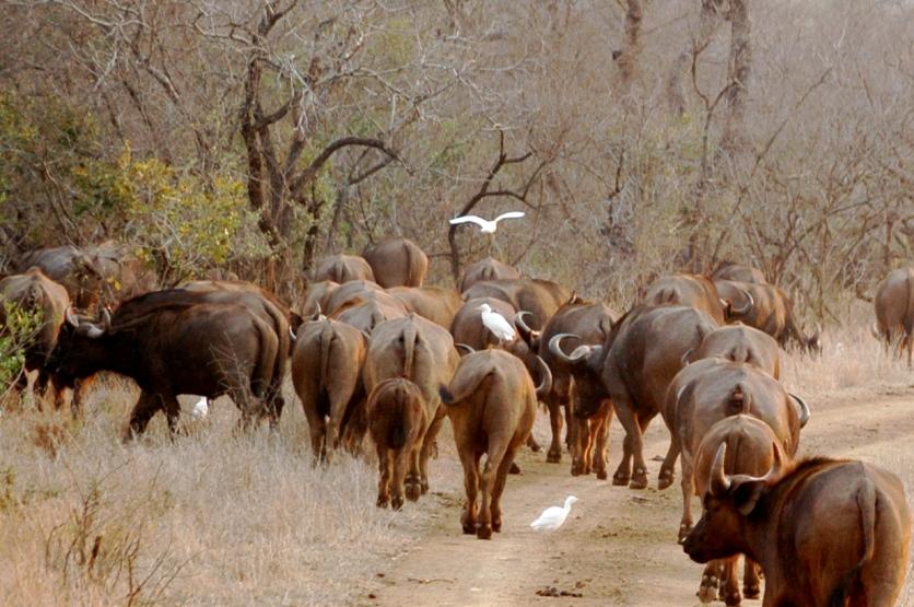 KrugerPark 080