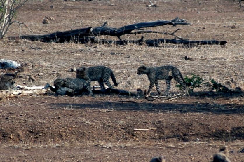 KrugerPark 098