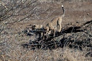 KrugerPark 112