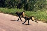 Latest Mozambique 074