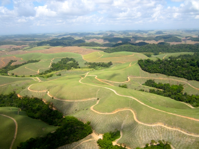 aerial view, sugar cane farm