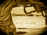 Through the aerial roots of this old tree...