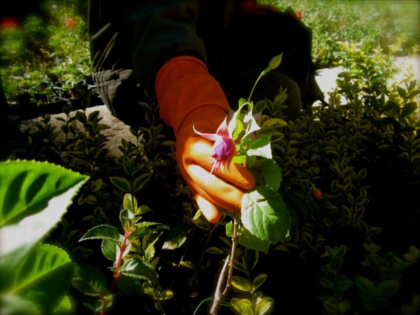 Botany 3rdculturechildren - Vivero aranjuez ...