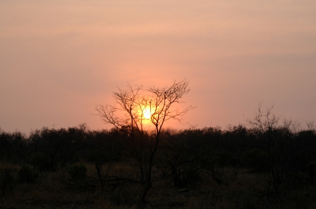Red sunset, at the Kruger Park, South Africa.
