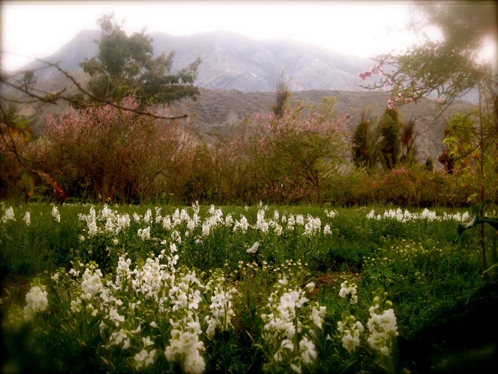 Photo Project '52 Bolivian Sundays' [week 30, 'Masterpiece']. (3/6)