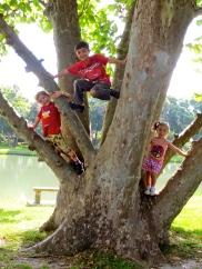 my branching tree...