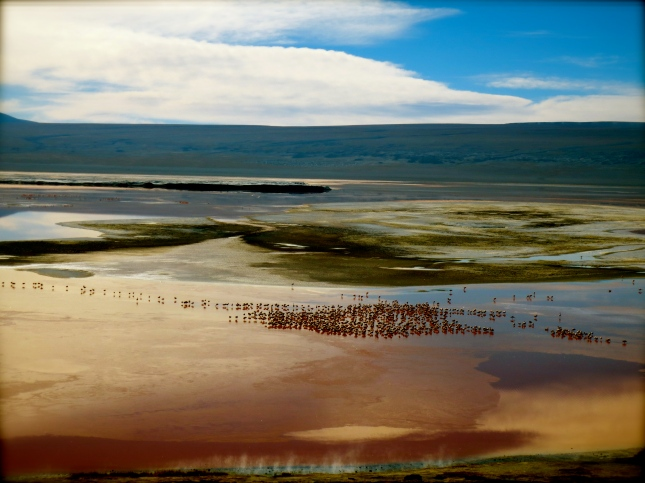 Red Lagoon - the 'Laguna Colorada' in Uyuni, with its characteristic surrounding flora and fauna...
